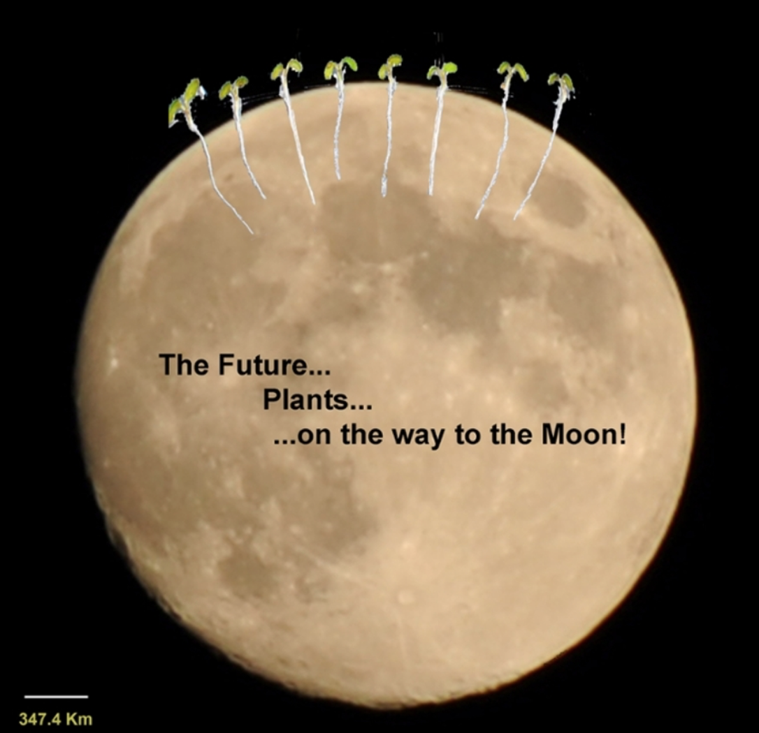 Figure 1. The Future...Plants...on the way to the Moon (picture G. Stefano)